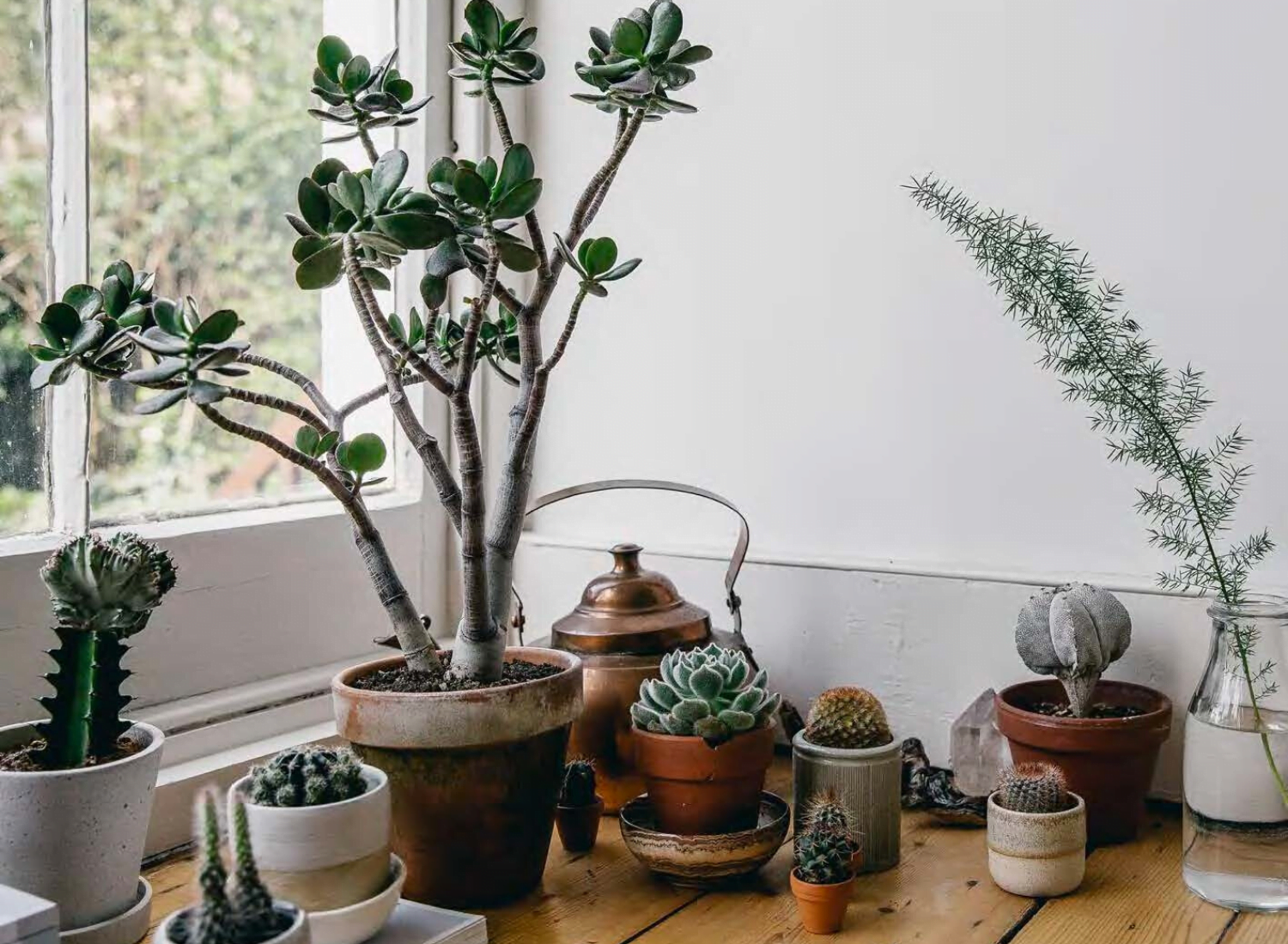 How To Take Care Of Your Succulents: 5 Important Tips