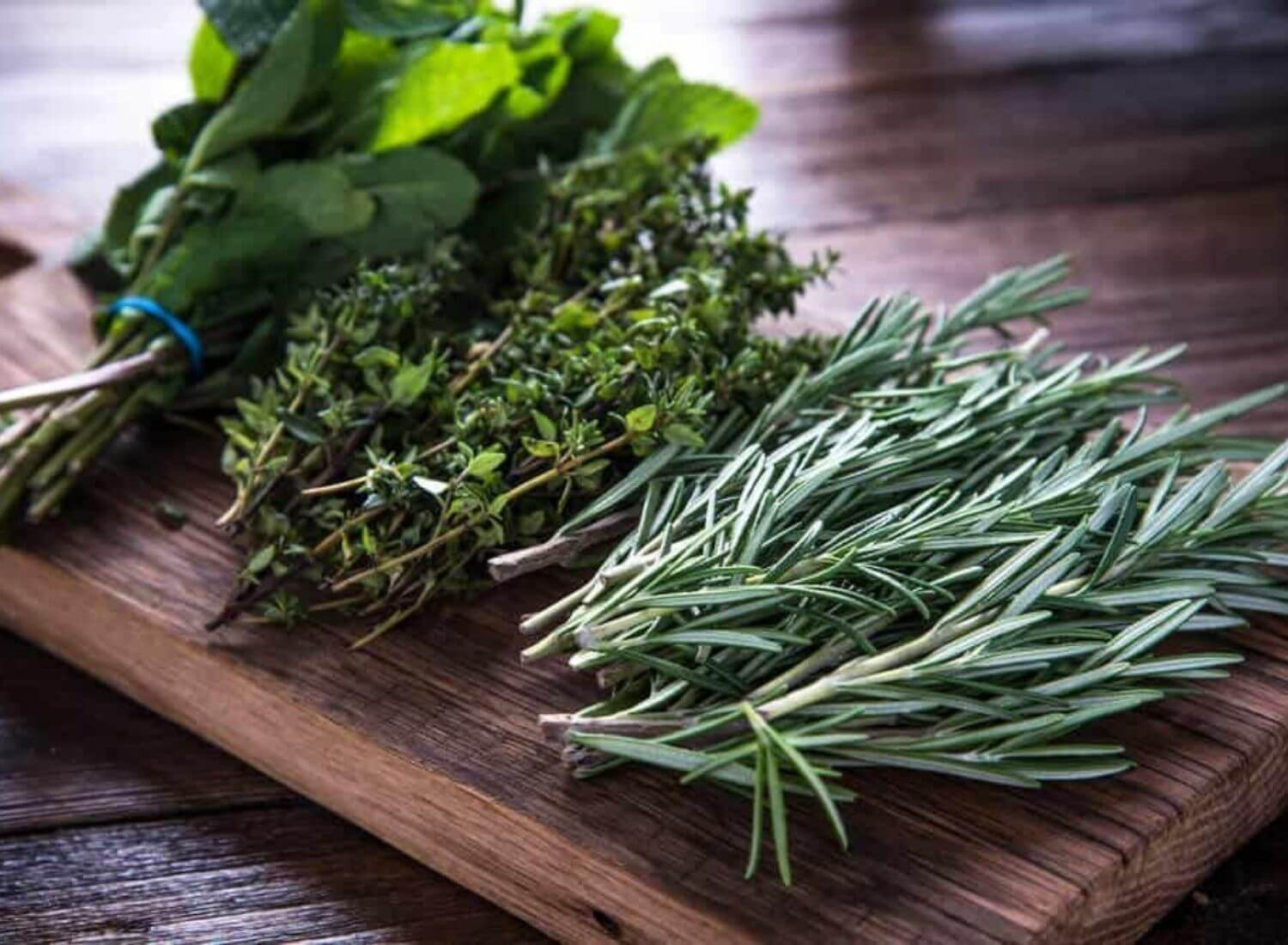 How To Grow Herbs From Seeds? (9 Different And Healthy Herbs)