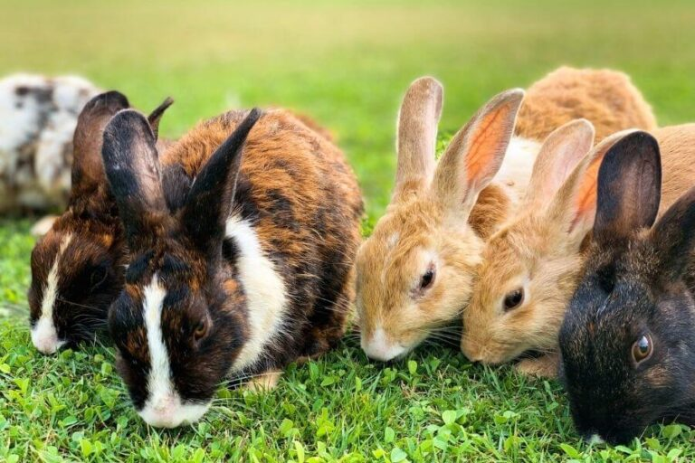 9 Myths And Facts About Rabbits As Pets