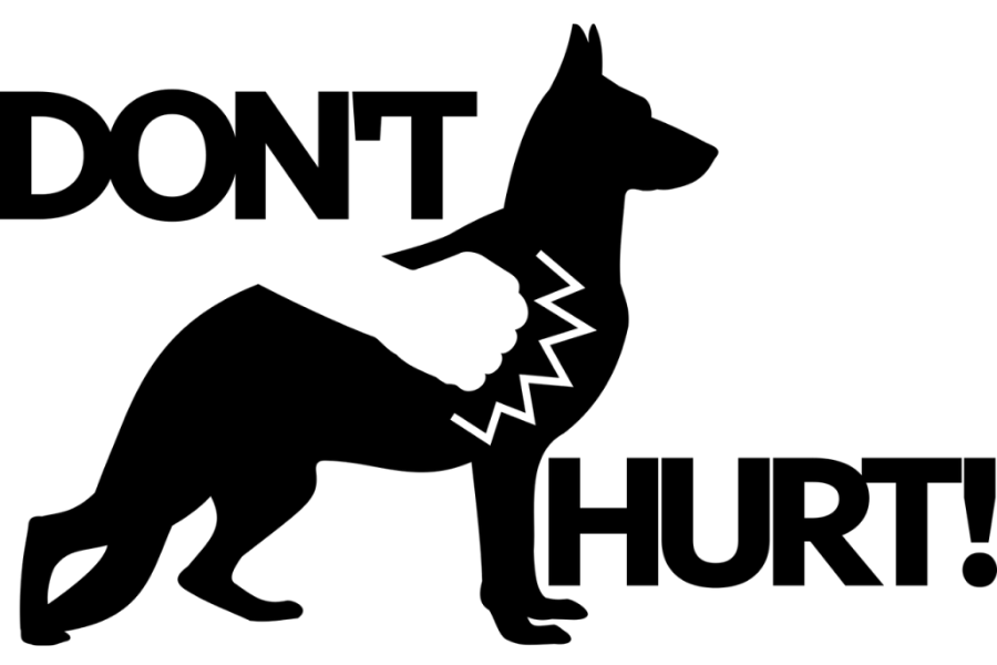 You cannot hurt stray dogs in any way.